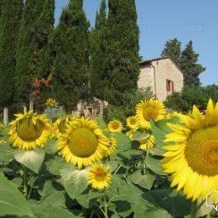 Casa-rural-Cetona-Antigua-granja-con-encanto_29